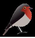 Robin GmbH Webdesign und SEO